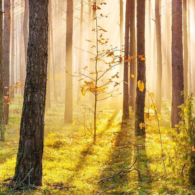 Foreste e biodiversità, troppo preziose per andare perse