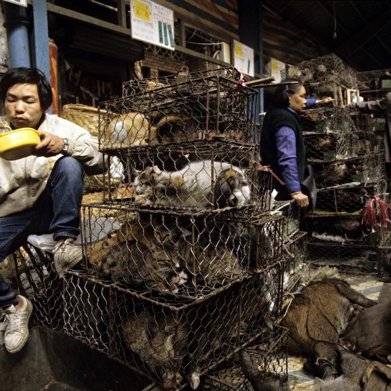 Confermato il collegamento tra pandemia e perdita di habitat degli animali