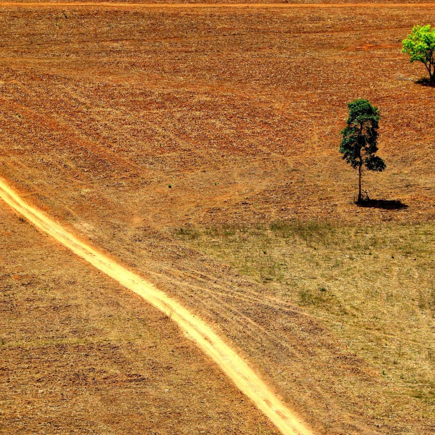 Amazzonia, nuovi studi confermano l'aumento di deforestazioni con Bolsonaro